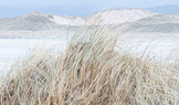 beach-grass
